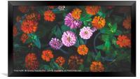 Colorful Daisy, Framed Print