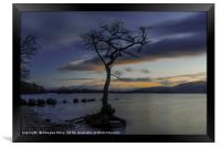 The Tree, Milarrochy Bay, Loch Lomond, Framed Print