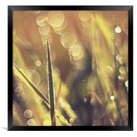 Beauty grass bokeh fantasy photo , Framed Print
