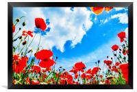 Poppy Field, Framed Print