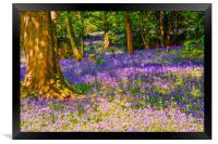 Bluebell Wood, Framed Print