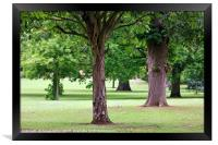Trees in a Park, Framed Print