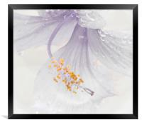 Floral Water Violet Accent, Framed Print