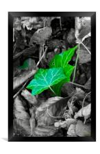 Green Leaves, Framed Print