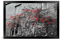 Red Flowers and monochrome stone cottage, Framed Print