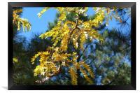 Aspen Sunshine, Framed Print