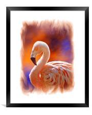 Chilean Flamingo , Framed Print