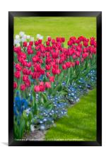 Spring flower arrangement , Framed Print