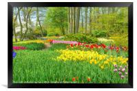 Tulips at Keukenhof garden, Framed Print