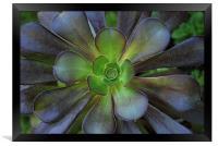 Flower Cactus, Framed Print