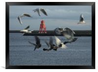 Gulls and Harbour light  041207 , Framed Print