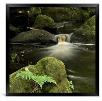 Ferns and Falls, Framed Print