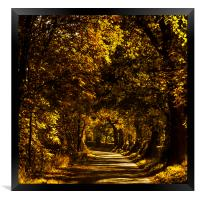 Autumnal Lane, Scottish Borders, Framed Print