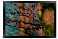 Avanar , Framed Print