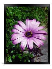 A flower, Framed Print