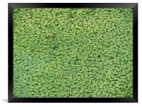 green carpet, Framed Print