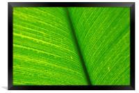 Banana Leaf, Framed Print