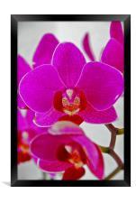 Orchid, Framed Print
