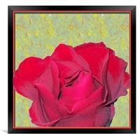 Red Rose, Framed Print