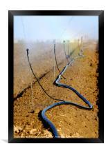 Israel, Negev, watering fields with sprinklers, Framed Print