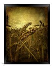 Wheat Field, Framed Print