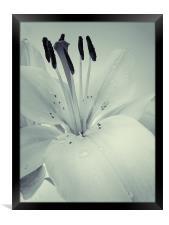 Lily, Framed Print