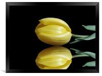 Mirrored Tulip, Framed Print