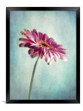 A Shade Of Pink, Framed Print