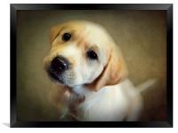 Puppy Love, Framed Print