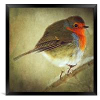 Robin, Framed Print