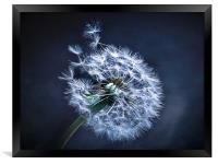 Dandelion Blues, Framed Print