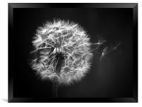Dandelion Whispers, Framed Print