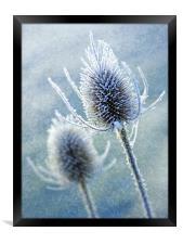 Wintery Teasles, Framed Print