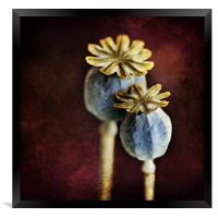 Dried Poppy Heads, Framed Print