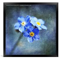 The Blues, Framed Print