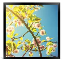 Vintage Blossom, Framed Print