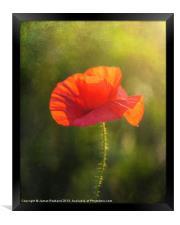 Poppy in the field, Framed Print