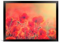 Poppies, Framed Print