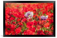 Purple & Red Poppies, Framed Print