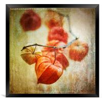 String of Lanterns, Framed Print