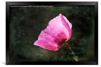 Poppy Sunshine, Framed Print