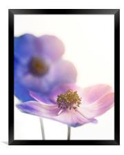 Sunlit Flowers, Framed Print