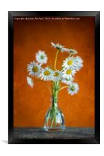 Oxeye Daisies, Framed Print