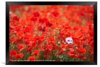 A Mass of Poppies, Framed Print