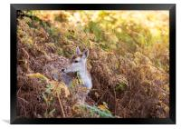 Deer in the Autumn, Framed Print