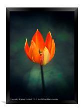 Licks of Flame, Framed Print