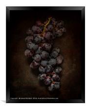 Dark Grapes, Framed Print