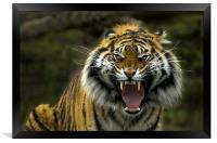 Eyes of the Tiger!, Framed Print