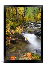 Golden Grove , Framed Print