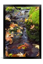 Clearly Autumn , Framed Print